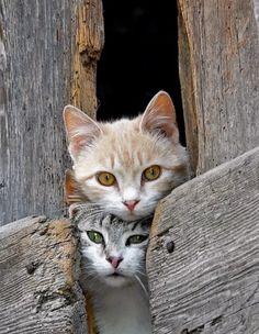 Hello #Cats