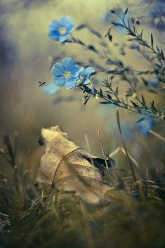 elvesandgnomes: imickeyd: Gabriel Prescornita - Charming blue Something about blue flowers.