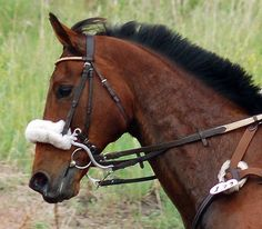 Bitless Stainless Steel Hackamore Rubber Curb Chain Easy Control Tack Horse Bit