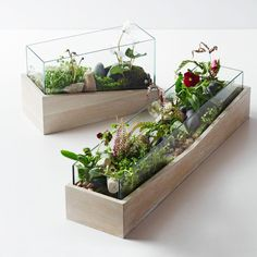 Roar + Rabbit Angled Wood Terrariums - West Elm