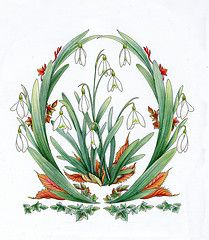 Snowdrop January Flower of the Month (Myrea Pettit) flowersofthemonth wwwfairiesworldcom