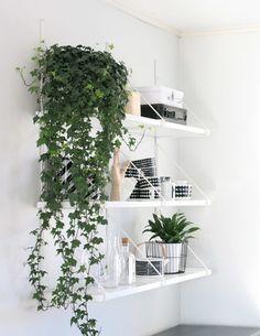 壁の棚を使ってグリーンコーナーを作ると、お部屋の雰囲気も明るく爽やかになります。つたの長いグリーンでクールな雰囲気も少し柔らかめに。