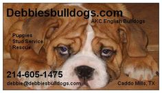 English Bulldogs - Our contact Information