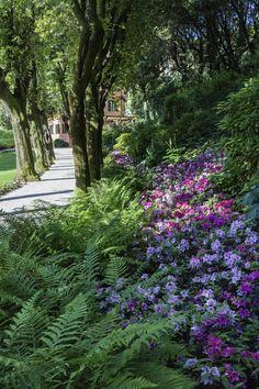 Azalea in bloom at the Villa. #lake #garda #villafeltrinelli #grandhotel #garden #park #plants #flowers