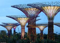 Gardens by the Bay in Singapore -  Lighting up the sky: The towering structures, made from concrete and steel, are up to 50 metres tall. Fitted with solar panels, hanging gardens and rainwater catches, the trees will be used to display plants from across the globe.