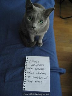 Cat Shaming---Ha this is proof im not imagining it!!!
