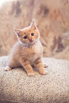 little cat de Sabine Sailer