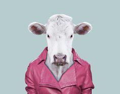 Cattle---Bos-Primigenius-Taurus