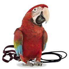 d4d7082bb051dc48bbf774863d31634d the aviator parrots 14 best parrot & bird harnesses images parrot bird, parakeets