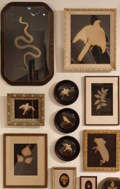 Kate Breakey's photograms
