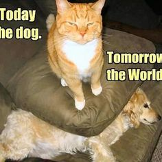 Haha! For all you cat lovers!
