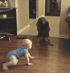 GIF Big dog was scared of a little kid