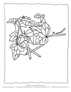 Pictures Of Ivy To Color Wonderweirded Wildlife Free Printable Leaf Coloring PAge And
