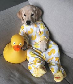Any dogs and puppies that are cute. See more ideas about Cute Dogs, Cute puppies Tags: Baby Animals Super Cute, Super Cute Puppies, Cute Little Puppies, Cute Little Animals, Cute Dogs And Puppies, Cute Funny Animals, Baby Dogs, Funny Dogs, Doggies