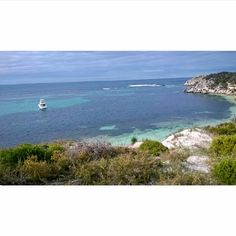 How beautiful is Rottnest Island? #SalmonBay #RottnestIsland #Australia #exploreaustralia #WA #westernaustralia #backpacking #cycling #Perth #surroundings  by chiara9511 http://ift.tt/1L5GqLp