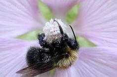 Bumblebee <3