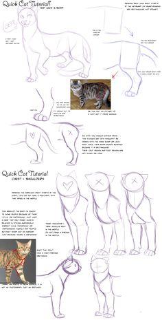 Quick Cat Anatomy Tutorial by AddictionHalfWay.deviantart.com on @deviantART