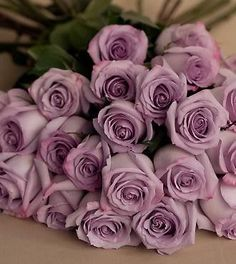 Lavender Roses, had this color in my wedding bouquet Love Rose, My Flower, Pretty Flowers, Purple Roses, Silver Roses, Purple Colors, Silver Ring, Pink, Rose Fotografie