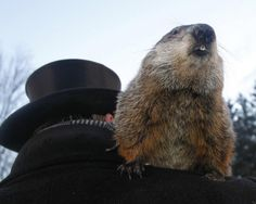 newslett februari, winter, phil, art, earli spring, blog, early spring, shadows, groundhog day