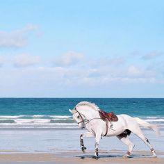 www.pegasebuzz.com | Equestrian photography : Muetc sur Instagram - chevaux en Bretagne.