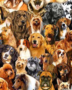 Pedigree - Westminster Dog Show - Nutmeg