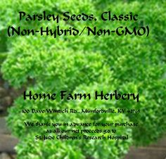 Parsley Seeds, Classic Heirloom seeds, BUY 1 OR BUY 3 & GET 1 FREE, Order now, FREE shipping