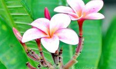 kauai-flora-and-fauna (5)