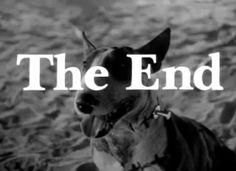 {*} The End. the end (via frankenweenie) Life Goes On, The End, Starters, Type, Disney, Board, Planks, Disney Art