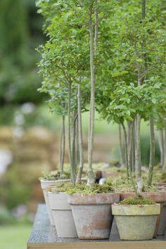Grüner Hochzeitsbaum