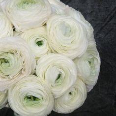 bukiet ślubny z białych jaskrów