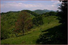 Ana Deveanu: Luncani-Paraul Mare-Varful Pades(muntii Poiana Ruscai) Drum, Montana, Country Roads, River, Nature, Outdoor, Sash, Cabin, Outdoors