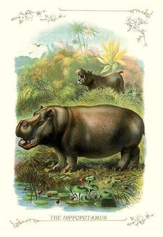 Two hippos in the forest by water.