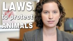 Criminal Laws to Protect Animals? | 30 Second Animal Law