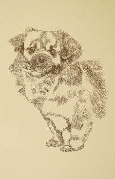 Tibetan Spaniel: Dog Art Portrait by Stephen Kline art drawn entirely from the words Tibetan Spaniel. He also can add your dog's name into the lithograph. - drawDOGS.com : drawdogs.com His collectors number in the thousands from over 20 countries and every state in the US. Kline's dog art has generated tens of thousands of dollars for dog rescues worldwide. http://drawdogs.com/product/dog-art/tibetan-spaniel-dog-portrait-by-stephen-kline/
