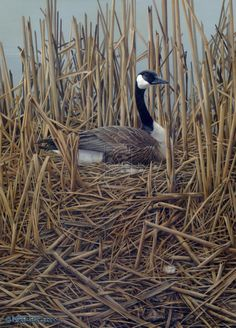 Lady in Waiting , Canada Goose by ~Blackjaxe on deviantART