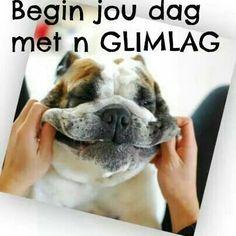 Begin jou dag Goeie More, Afrikaans, French Bulldog, Dogs, Animals, Animales, Animaux, French Bulldog Shedding, Pet Dogs
