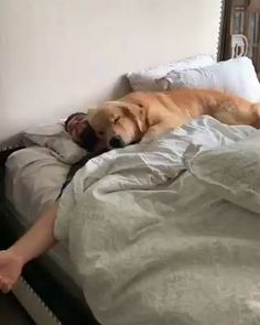 Snuggles with bae 😍❤️ - animals - Perros Graciosos Cute Funny Animals, Cute Baby Animals, Funny Dogs, Funny Memes, Cute Puppies, Cute Dogs, Cute Babies, Fluffy Puppies, Awesome Dogs