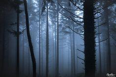 Quiet darkness by Nathalie HAVEZ on 500px