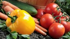 Mykoríza a pestovanie zeleniny