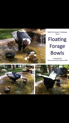 Floating foraging enrichment bowls. Nice idea for the flamingos since rats have discovered their bowls.