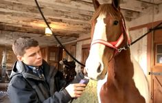 Amish Mafia season two newcomer Caleb Isaac Meyer grooming a horse.