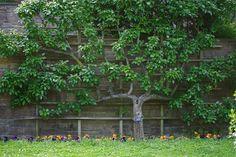 NYC ♥ NYC: Blooms and Foliage at Brooklyn Botanic Garden