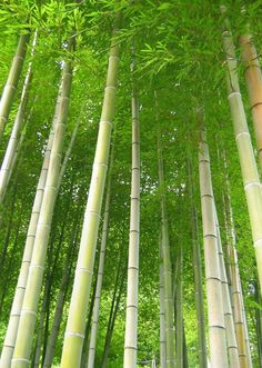 Bamboo trees...love this!