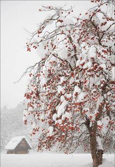 paisajes de invierno bonitos fondo pantalla