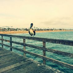 Seal Beach Pier | Yelp