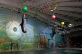 Dubai Dolphinarium Tour (60 Min) With Transfers -Dubai / United Arab Emirates