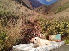 We put up a mural.  #luismyhomegirl #sawtooth #mountains #photography #dog #notaprop