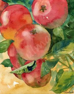 This original watercolor painting pictures bright red apples hanging from an apple tree.