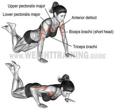 fitness Knee push-up. A compound exercise for beginners. Synergistic muscles: Upper Pectoralis Major, Anterior Deltoid, and Triceps Brachii. Dynamic stabilizer: Biceps Brachii (short head only). Fitness Workouts, At Home Workouts, Training Workouts, Yoga Fitness, Sixpack Workout, Compound Exercises, Chest Workouts, Chest Exercises, Weight Training