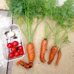 carrots tomatoes potatoes grow your own containers patio - lylia rose blog